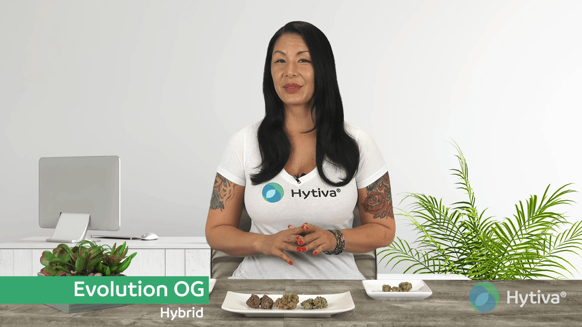 Strain Review: Evolution OG Youtube Video