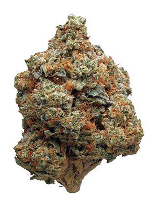 Fire OG Strain - Hybrid Cannabis Review, CBD, THC, Terpenes