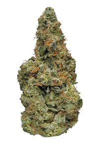 Fruity P - Hybrid Cannabis Strain