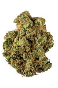 G13 - Indica Cannabis Strain