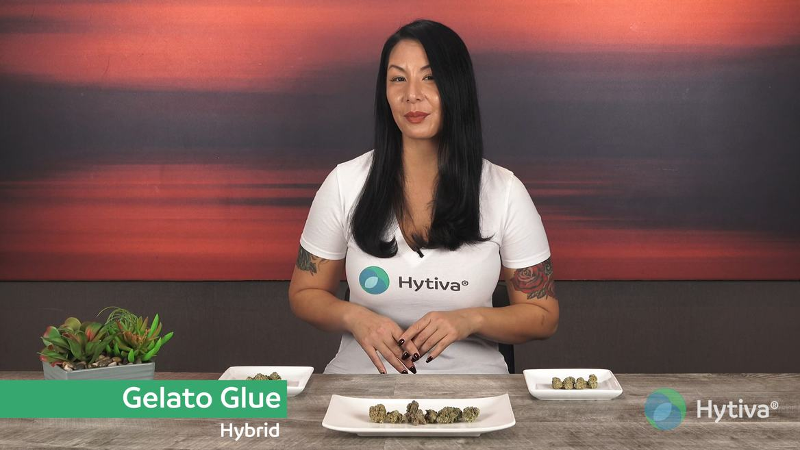 Strain review video: Gelato Glue