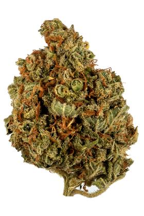 Glass Slipper - Híbrido Cannabis Strain