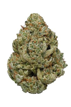 Gorilla Glue #4 - Hybrid Cannabis Strain Information & Video