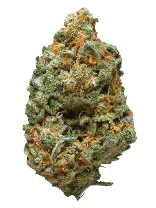 Grand Hustle - Hybride Cannabis Strain