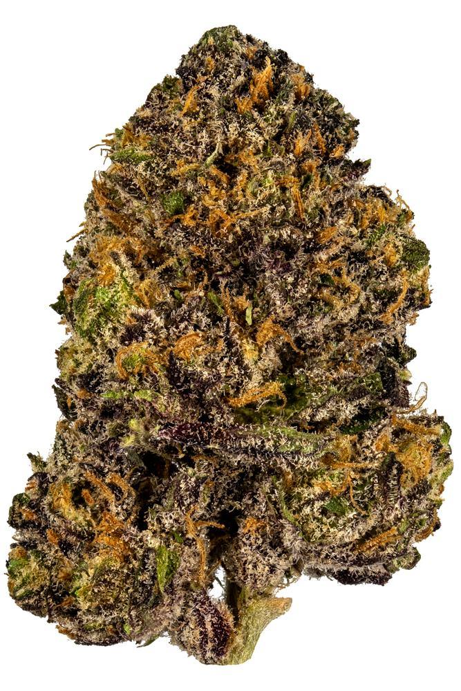 Granddaddy Purple Strain - Hybrid Cannabis Video, CBD, THC, Terps : Hytiva