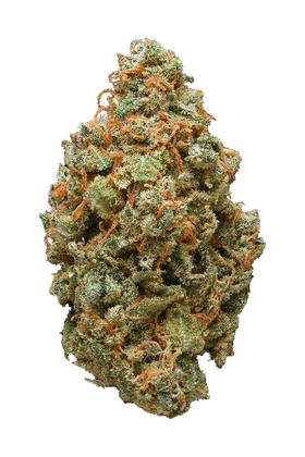 Great White Shark - Sativa Cannabis Strain