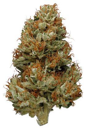 Green Haze Strain - Sativa Cannabis Review, CBD, THC : Hytiva