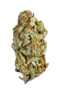 Hash Plant - Indica Cannabis Strain