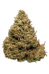 Haze - Sativa Cannabis Strain