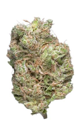 Kona Gold - Sativa Cannabis Strain