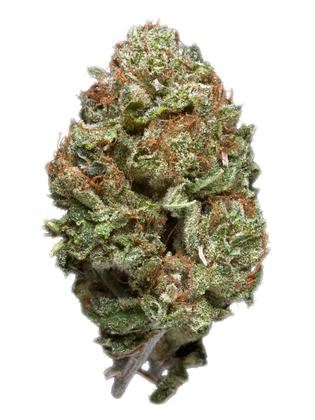 Lemon Bubble - Sativa Cannabis Strain