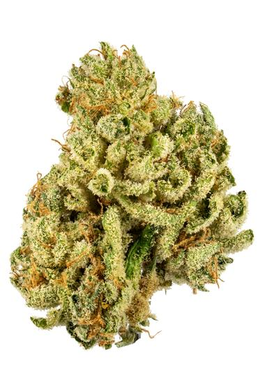 Lemon Dawg - Hybrid Cannabis Strain