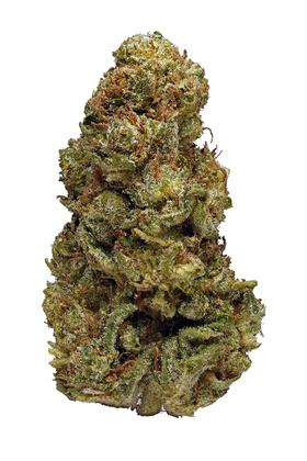 Lemon Tree - Hybrid Cannabis Strain