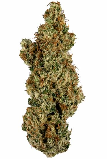 L'Orange - Sativa Cannabis Strain