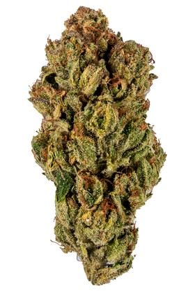 Mad Man - Hybrid Cannabis Strain