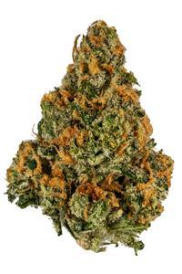 Mango Kush - Hybrid Cannabis Strain