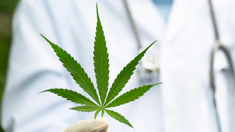 Florida: How to find the right Medical Marijuana Doctor near You.