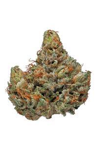 Master Kush - Indica Cannabis Strain