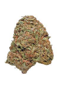 Maui Waui - Sativa Cannabis Strain