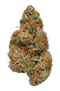 Mazar I Sharif - Indica Cannabis Strain