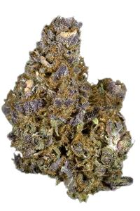 Mendocino Purps - Hybrid Cannabis Strain