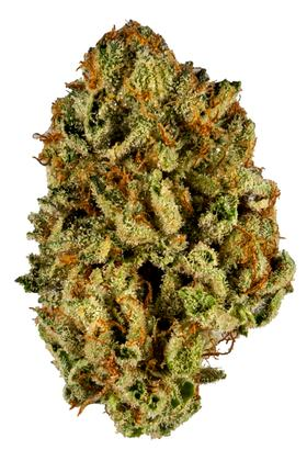 Million Dollar Baby - Híbrido Cannabis Strain
