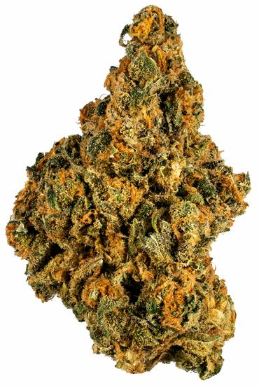 Cannabis Strain for Studying reviews by Hytiva