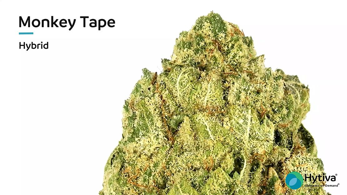 Strain Review Video: Monkey Tape