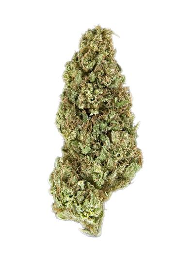 Mother Tongue - Hybrid Cannabis Strain