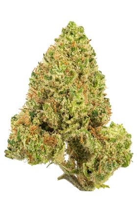 Mountain Orange - Hybrid Cannabis Strain