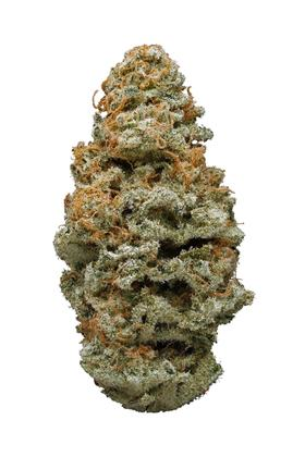 New Jack - Sativa Cannabis Strain