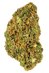 Northern Lights #5 x Haze - Hybrid Cannabis Strain