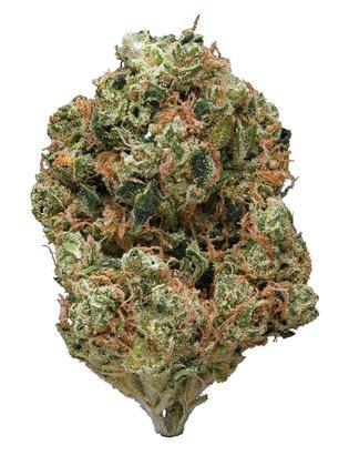 A robust bud of the Obama Kush cannabis strain.