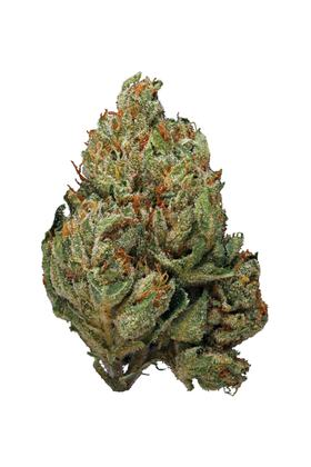 Ocean Grown Kush - Hybrid Cannabis Strain