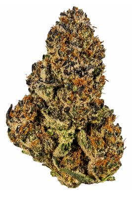 Orange Daiquiri - Hybrid Cannabis Strain