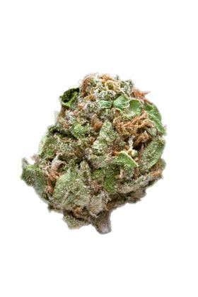 Orange Crush - Sativa Cannabis Strain