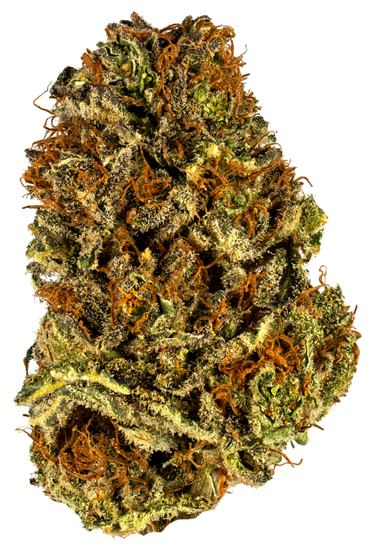 Orange P.O.T.U.S. - Hybrid Cannabis Strain