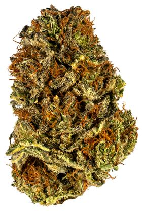 Orange POTUS - Híbrido Cannabis Strain