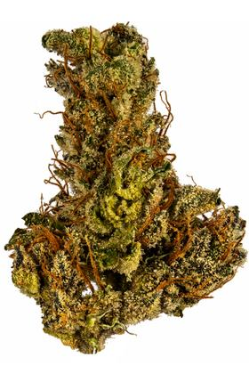 Orange Zeta - Hybrid Cannabis Strain