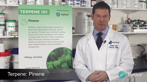 Pinen : Ihre Terpene kennen