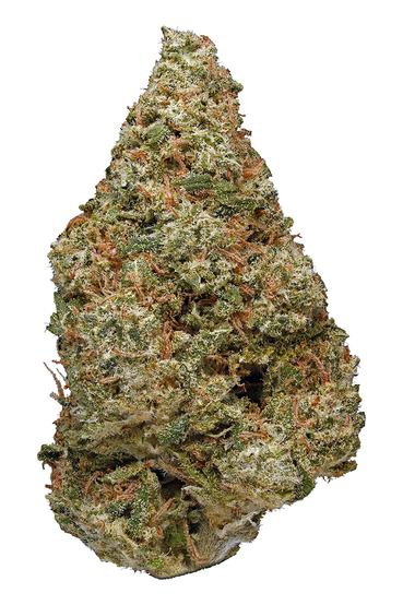 Power Plant - Sativa Cannabis Strain
