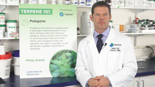 Pulegon : Ihre Terpene kennen