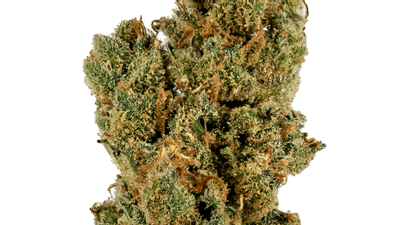 Pure Haze - Sativa Strain