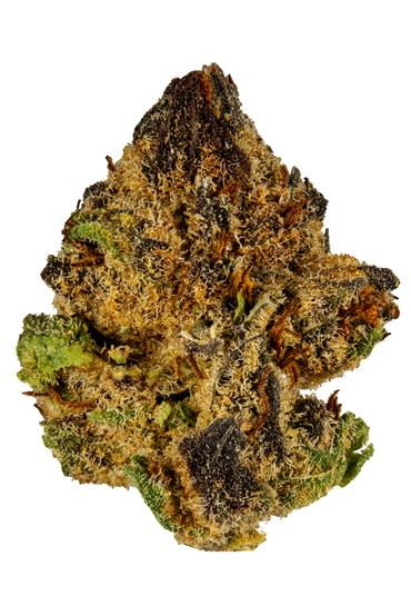 Purple Champagne - Sativa Cannabis Strain