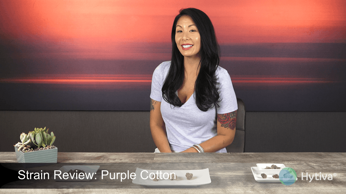 Strain review video: Purple Cotton