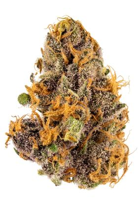 Purple Cough - Hybrid Cannabis Strain