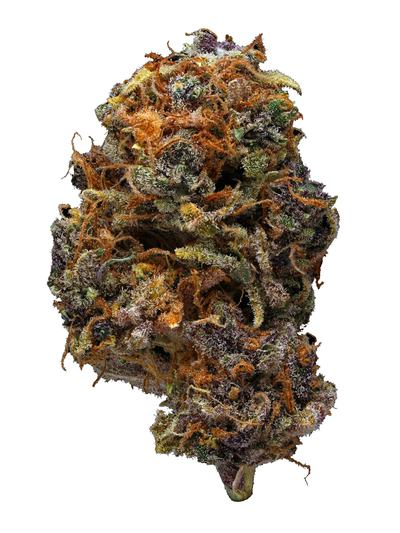 Purple Dawg - Hybrid Cannabis Strain