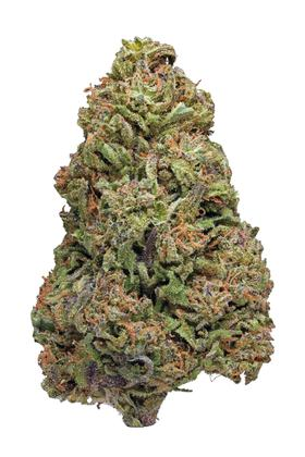 Purple Dragon - Indica Cannabis Strain