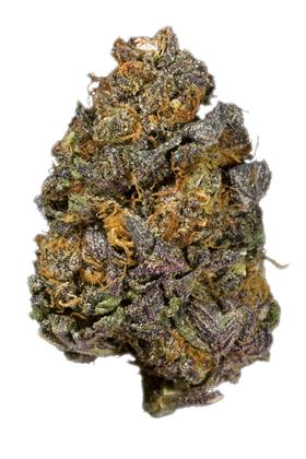 Purple Elephant - Hybrid Cannabis Strain