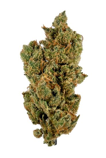 Pure Haze - Sativa Cannabis Strain